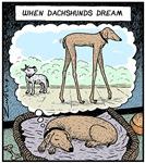 When Dachshunds dream