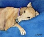 sleepy Greyhound