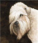 Soft Coated Wheaton Terrier