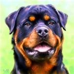 Rottweiler Art Prints