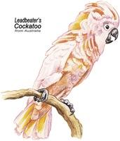 Leadbeater's Cockatoo Bird