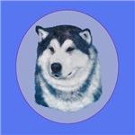 Alaskan Malamute Show dog