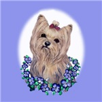 Yorkshire Terrier Miss Priss