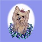 Yorkshire Terrier Miss Priss
