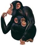 Chimpanzee T-Shirts