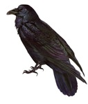 The Raven T-Shirts