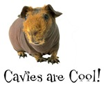 Cavies are Cool