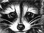 Little Rascal Raccoon