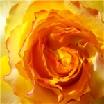 Tile Coasters - Roses