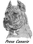Presa/Dog Canario - 4 images  *2 NEW PHOTOS*