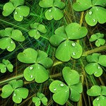 Shamrock Clover St Patrick's Design