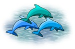 Dolphin T-shirts & gifts