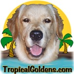 Tropical Goldens