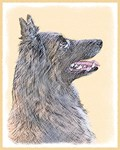 Belgian Tervuren - Multiple Illustrations