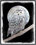 Snowy Owl and Moon