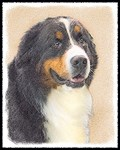Bernese Mountain Dog-Multiple Illustrations