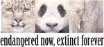 Endangered now