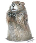 emerging groundhog