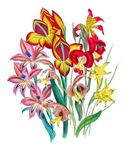 Loudon Red, Pink and Yellow Gladiolas