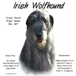 Irish Wolfhound (grey)