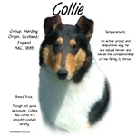 Collie (smooth tri)