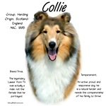 Collie (rough sable)