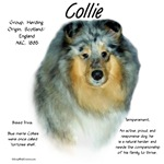 Collie (rough merle)
