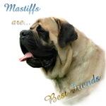Mastiff Friend Fawn