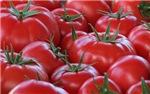 .market tomatoes.