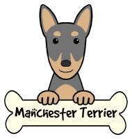 Manchester Terrier Cartoon T-Shirts and Gifts
