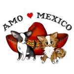 Amo Mexico Chihuahuas