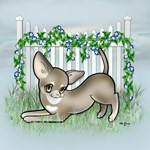 Garden Fence Chihuahua- Smooth Sable Bow