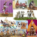 Dogs and Cats Together - These dogs and cats are having fun playing games like this twister game