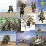 Unusual Elephant Photos