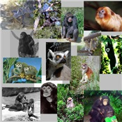Primate Photo Gifts