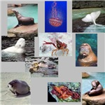 Marine Animal Photo Gifts
