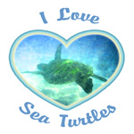 I Love Sea Turtles