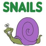 Cute & Silly Snail Designs