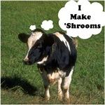 I Make 'Shrooms