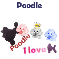 Poodle Pet Dog