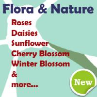 Flowers, Flora | Nature