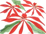 Poinsettia Christmas Goodies