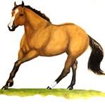 Dun Stallion, Sun Dun Zippo