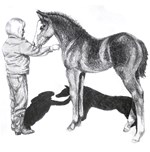 Black foal and Girl