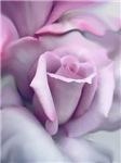 Rose Flower Art