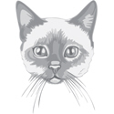 Tonkinese Cat Illustration