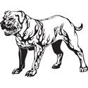 Pit Bull Tattoo