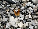 Butterfly Rest (Sundance, UT)