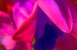 Flowers & Plants (22)