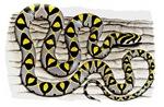 Mandarin snake